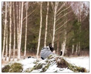 wintertime_12-9066